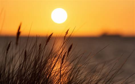 Sunset grass seascape