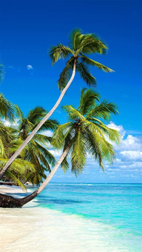 wallpaper beautiful beach palm trees sea blue sky