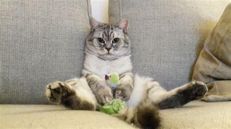 katze uriniert auf sofa katzen erziehen worauf kommt es an bei der katzenerziehung