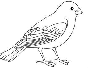 bird coloring page pictures of birds to colour az coloring pages