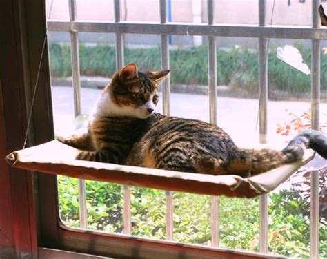 Sunny Seat Window Mounted Cat Bed - pamper your feline friend with the sunny seat window mounted cat bed getdatgadget