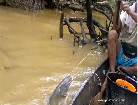 mancing ikan patin liar  sungai pakai umpan alami