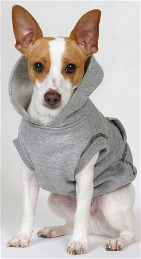 rat dogs rat terriers rats and terriers on