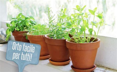piante da orto in vaso orto in vaso le 7 piante pi 249 facili da piantare sul