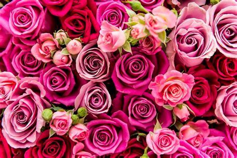 i fiori come mantenere i fiori freschi pi 249 a lungo e avere cura