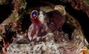 Sleepsuit Blue Stripe Octopus Turn Me Around underwater photo location blue heron bridge palm fl