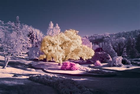 7 Tips On Taking Beautiful Digital Photographs by 45 Surreal Infrared Photography Inspirations And Tips