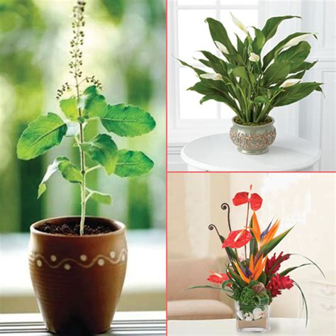 beautiful house plants home decor 8 beautiful plants to grow indoors slide 1