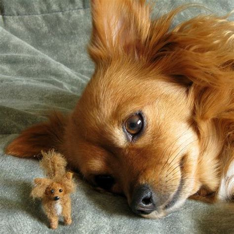 long hair chihuahua hair growth what to expect needle felted long haired chihuahua by kaysk9s via flickr