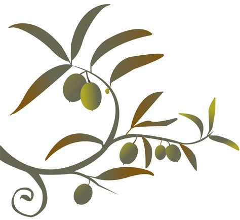 olives clipart olive tree branch drawing clipart best