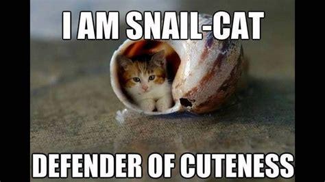 cat meme cat memes