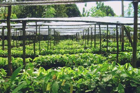 Harga Plastik Okulasi teknik pembibitan kakao dengan cara generatif pabrik dan