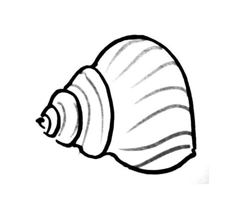 shell coloring pages sea shell coloring pages