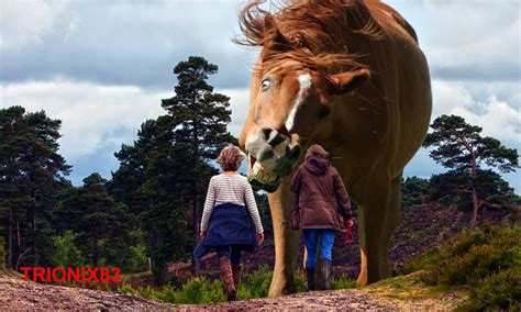 imagenes de animales mas grandes del mundo los caballos mas grandes del mundo el caballo mas grande