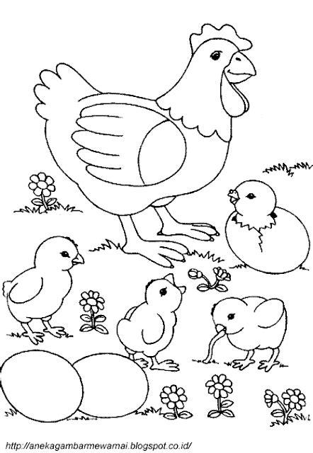 printable untuk anak 2 tahun gambar mewarnai ayam untuk anak paud dan tk
