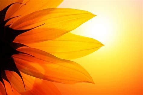 sound reiki healing meditations catherine varga