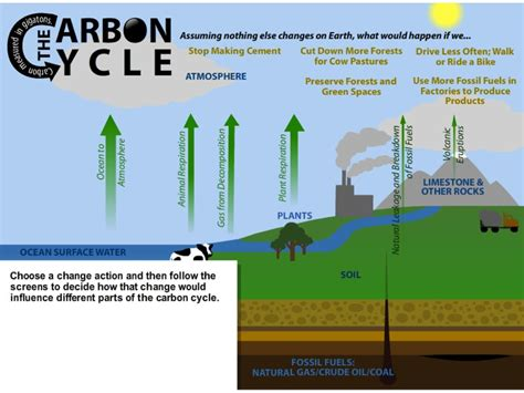 flow diagram of carbon cycle flow diagram of carbon cycle 28 images flowchart of
