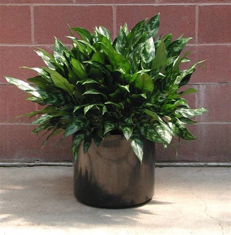 awesome interior foliage decoration idea luxury modern and