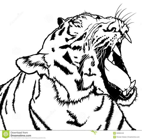 roaring tiger stock vector image 68086448