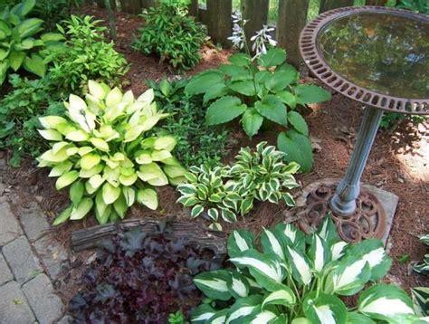 Hosta Garden Layout 50 Best Images About Gardening On Raised Beds Sweet Potato Slips And Garden