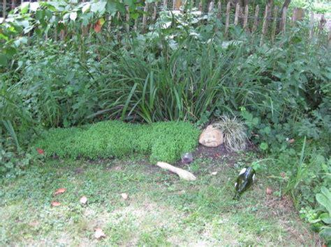strange garden ideas at javama s moblog