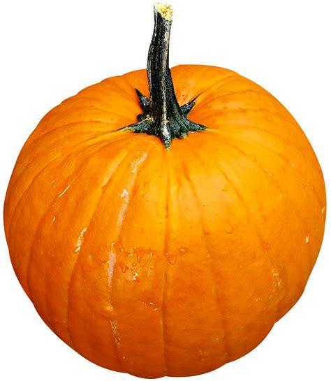 images of pumpkins for pumpkin png image pngpix