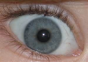blue green eye color file blue green eye closeup jpg wikimedia commons