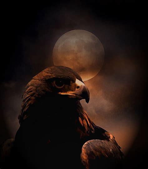 wallpaper black eagle 1000 images about black eagle on pinterest eagle