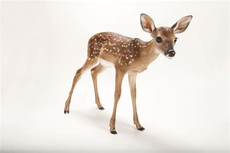 deer images deer wallpapers pattern hq deer pictures 4k wallpapers