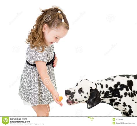 what to feed baby puppies happy baby feeding isolated royalty free stock images image 32374299