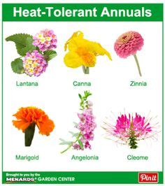 Heat Tolerant Flowers For Planters by 1000 Images About Gardening House Plants On