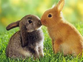 amazon black friday devices rabbits wallpaper cute rabbits animal wallpapers gallery