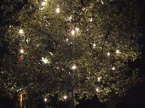 installation of fairy lights in trees 48 best images about garden wedding ideas on gardens receptions and garden wedding
