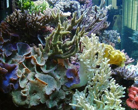 aquarium len reefscapes