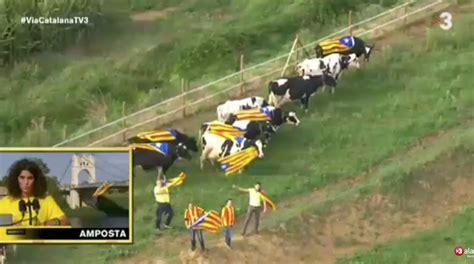 imagenes graciosas independencia cataluña via catalana 10 im 225 genes que nos deja la cadena humana