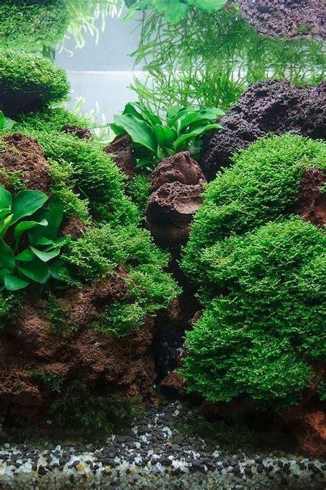 Aquascape Fish by Best 25 Aquascaping Ideas On Aquarium