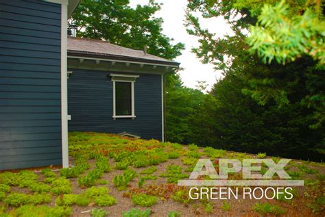 residential apex green roofs