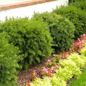 Texas Landscaping Ideas by South Central Gardening Landscape Your Yard With Evergreens