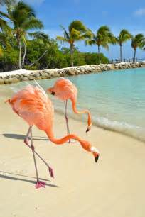 Pink Flamingos In Aruba » Home Design 2017