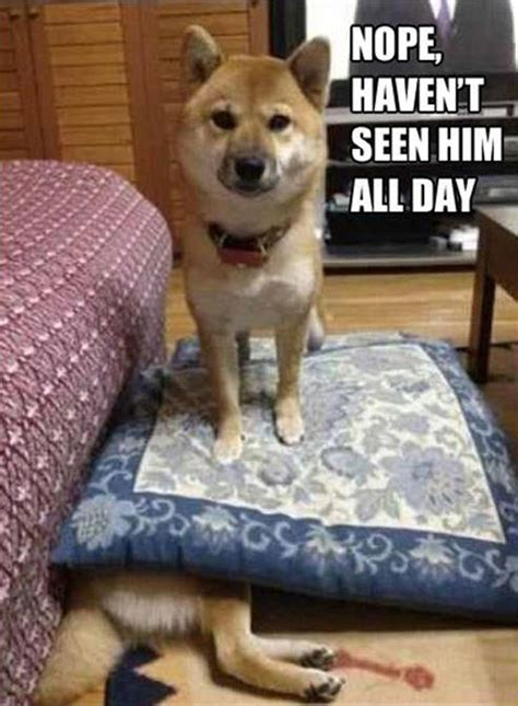 Funny Animal Memes Pictures - 06 15 13 i love funny animal sweet funny animal photo