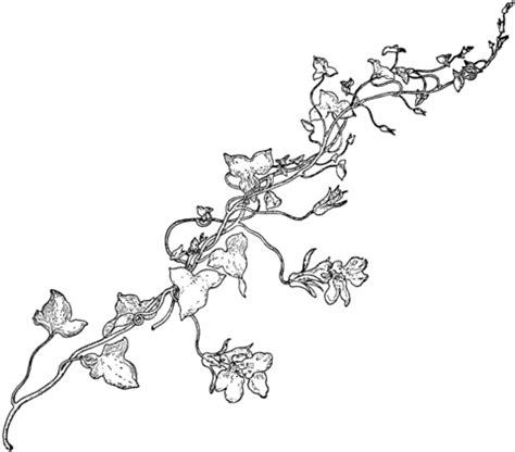 vine leaf coloring page ausmalbild l 246 wenmaulzweig ausmalbilder kostenlos zum