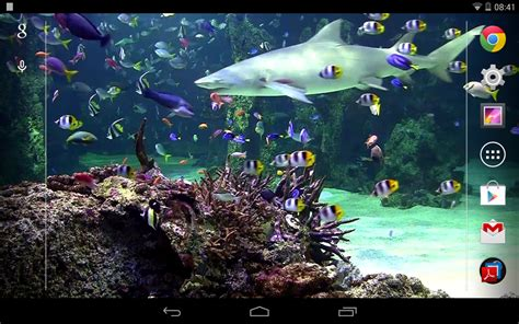 aquarium live wallpaper hd for android youtube aquarium live wallpaper free android live wallpaper