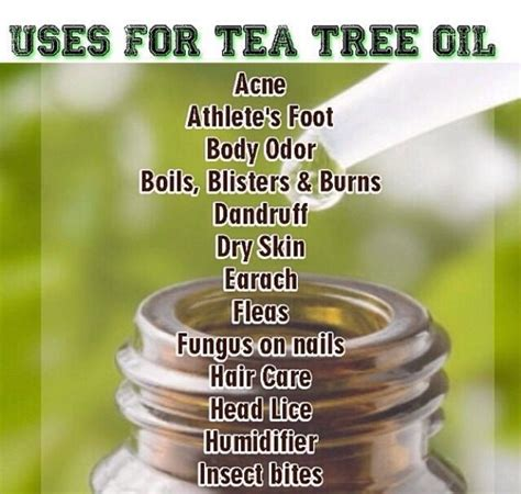 does tea tree oil kill lice 17 best images about natural home remedies on pinterest