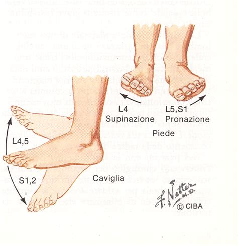 dolore alla caviglia lato interno the secret of raymond bard ॐ quando la fascite plantare