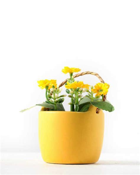 10 Ceramic Flower Pot by 10cm Aglaia Odorata Silk Flower In Ceramic Pot