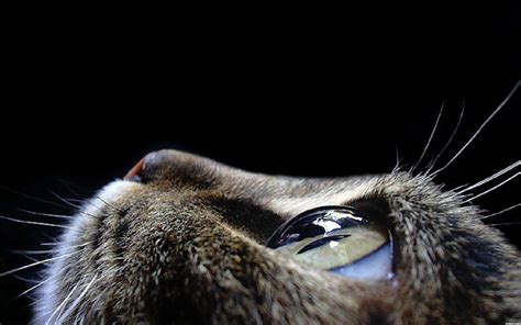 imagenes asombrosas tumblr cat eye wallpaper eyes wallpaper 28331369 fanpop