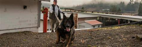King County Search King County Search Dogs