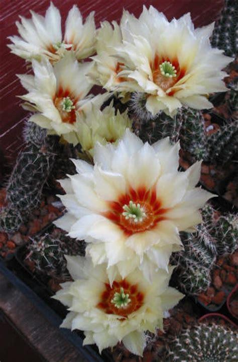 j j cactus and succulents