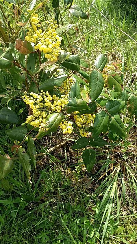 Wer Kennt Diese Pflanze wer kennt diese pflanze wer weiss was de