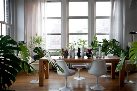 top tips  arranging indoor plants